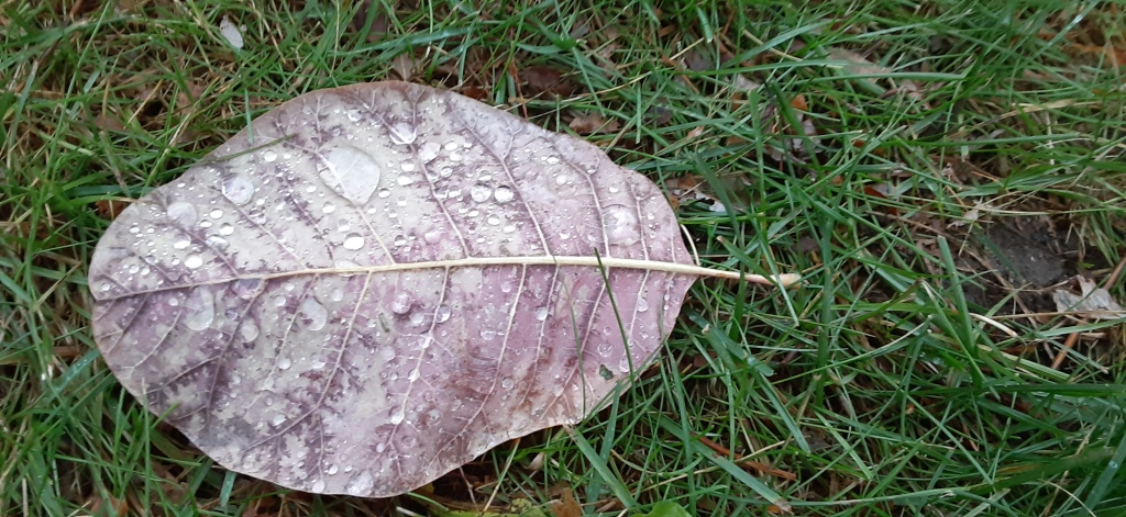 A leaf on the grass