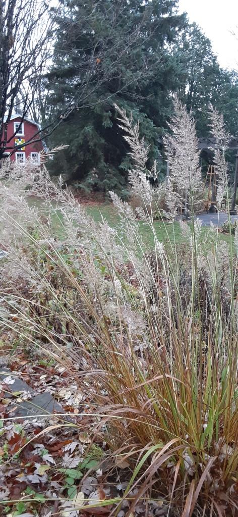 Grasses in autumn